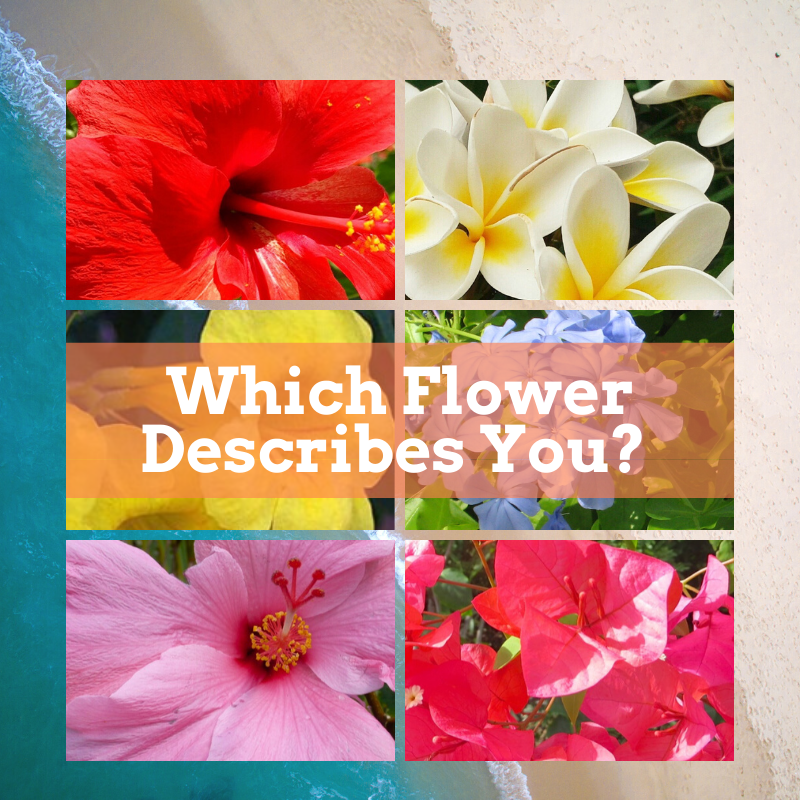 Quiz - Which Flower Are You